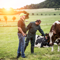Sustainable dairy farming: 9 out of 10 Arla farmers on board from the start