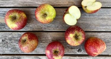Ingrid Marie æble