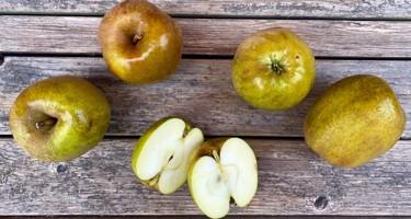 Belle de Boskoop æble