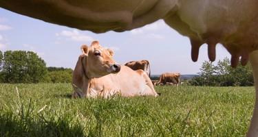 Dyrevelfærdsmærket på mælk