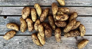 Aspargeskartoffel