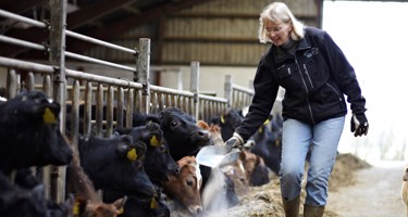 Hvad er dyrevelfærd - i mælkeproduktionen?