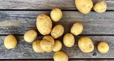 Gala kartoffel