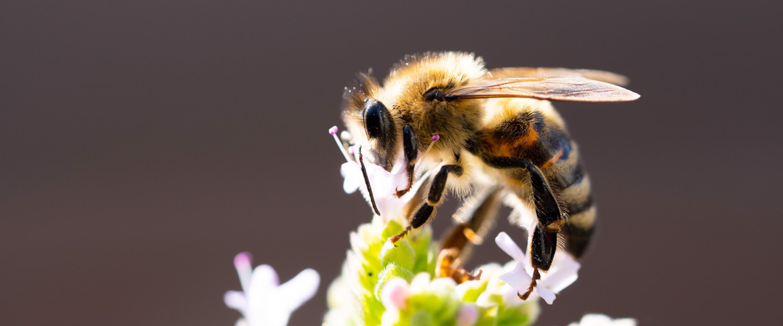 Bin och pollinering